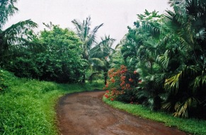 roadinmaui-edited3.jpg