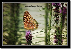 IMG_0605Butterfly