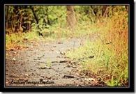 dirt-path_thumb.jpg