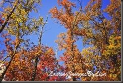 IMG_1505FallTrees