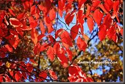 IMG_1508RedFallFoliage2011
