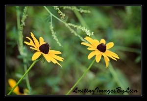 2010 06 28_6459flowers