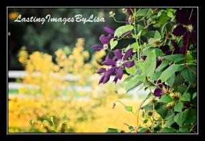 2010 06 28_6469flowers