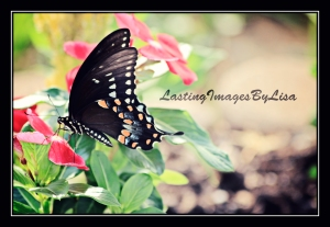 IMG_0810ButterflyWithMyWatermark