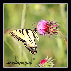 IMG_6057butterfly
