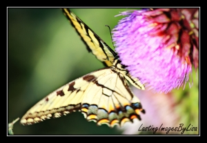 IMG_6059butterfly